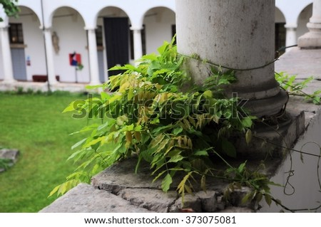 Inside the former Franciscan monastery with colonnade and wisteria. Renaissance architecture. - stock photo