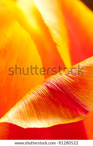 Inside the Tulip - stock photo