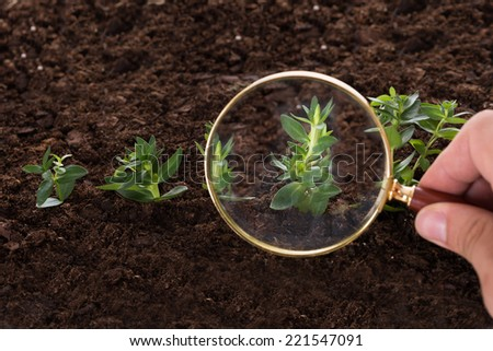Inspecting new saplings growth with magnifying glass - stock photo