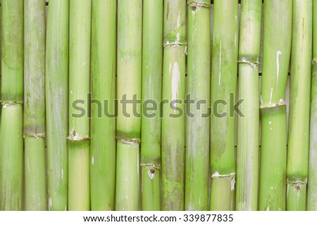 Inspirational, natural green bamboo background creating a zen scene with an empty copy space for editor's text.