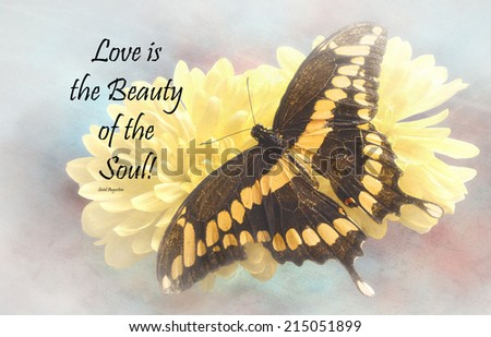 Inspirational quote about life, love, and time by Saint Augustine with a beautiful Giant Swallowtail  Butterfly  on a textured background  - stock photo