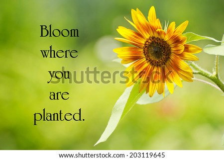Inspirational quote by Mary Engelbreit with a pretty sunflower in full bloom in the summer. - stock photo