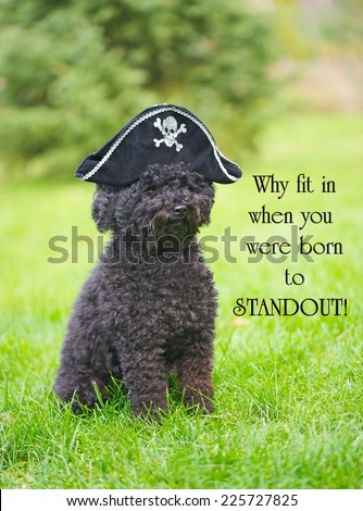 Inspirational quote on individuality by Dr. Suess with an adorable poodle wearing a pirate hat. - stock photo