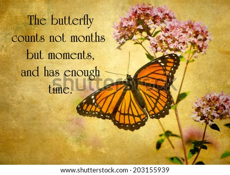 Inspirational quote on life by Rabindranath Tagor with a beautiful grunge textured image of a monarch butterfly perched on some flowers.  - stock photo