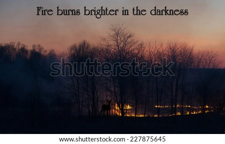 Inspirational quote on life by Suzanne Collins with a grass fire at sunset, with a  silhouetted deer looking on, cautiously. - stock photo