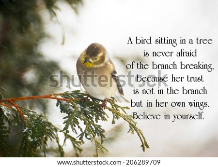 Inspirational quote on life with a pretty goldfinch perched on a branch in winter.  - stock photo