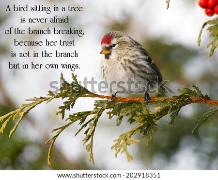 Inspirational quote on life with a pretty redpoll bird perched on a branch in winter.