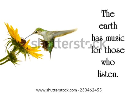 Inspirational quote on nature by George Santayana with a beautiful hummingbird in motion at a sunflower. - stock photo