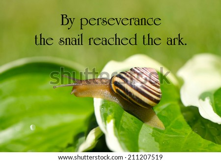Inspirational quote on perseverance by Charles Spurgeon, with a little garden snail making its way through life. - stock photo