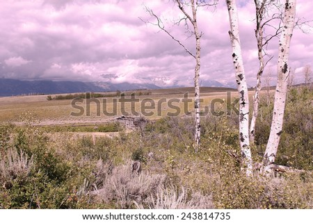 Instagram effect added to Grand Teton Landscape with Historic Homestead Cabin fronted by Aspen Trees.  Magenta cast is intentional. - stock photo