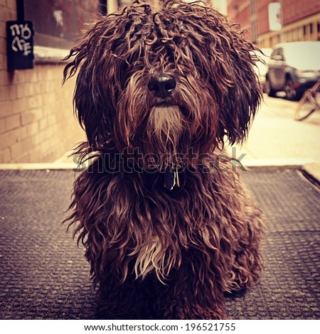 Instagram filtered style image of a cute dog in New York City. - stock photo