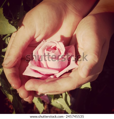 instagram of dirty garden hands holding rose with effect - stock photo