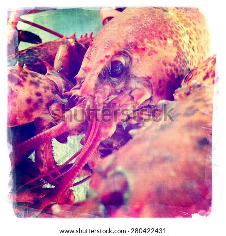 instagram style image of a boiled lobster close up - stock photo