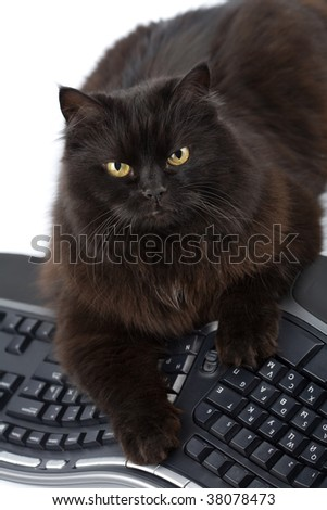 intelligent black cat and computer isolated - stock photo