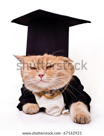 intelligent cat for the laptop.Animal in the academic robes on a white background.financial success - stock photo