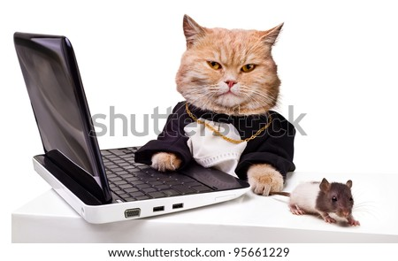 intelligent cat with a mouse for the laptop.Animal in the academic robes on a white background.financial success - stock photo