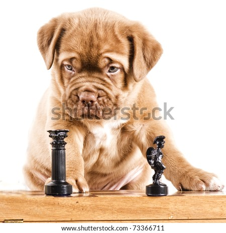 Intelligent puppy - stock photo