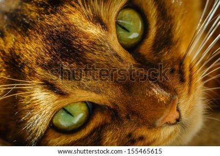 Intense green eyes - stock photo