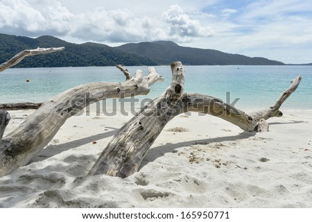Interesting dead tree on tropical beach, Thailand - stock photo
