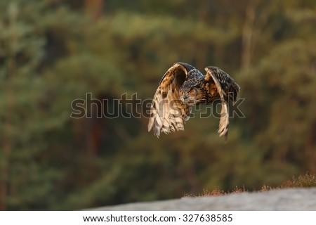 interesting eagle owl flying - stock photo