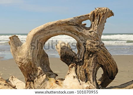 Interesting root wad driftwood on the beach near Bandon Oregon - stock photo