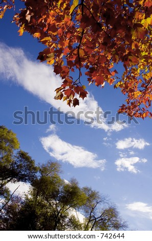 Interesting view of fall colors - stock photo