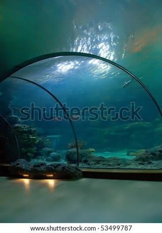 interior of aquarium - stock photo