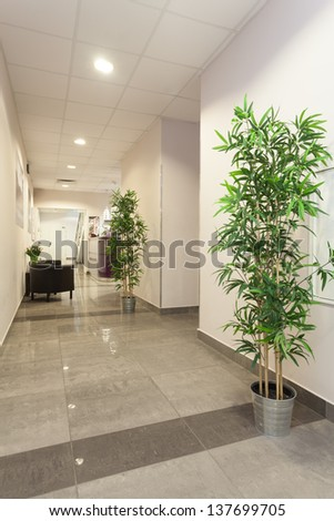 Interior of new office, corridor with plants - stock photo