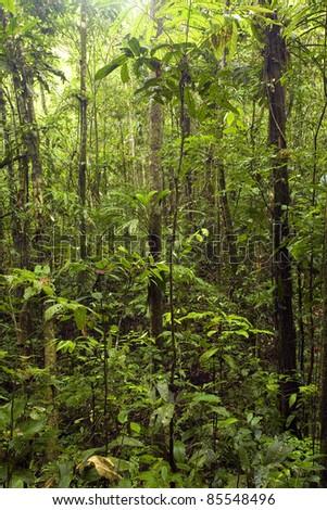 Interior of tropcal rainforest in Ecuador - stock photo
