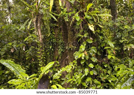 Interior of tropical rainforest in Ecuador - stock photo