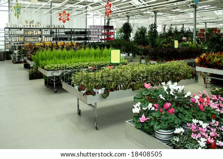 Interior shot of big green botanic shop