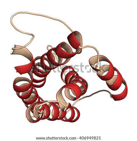 Interleukin 6 (IL-6) cytokine and myokine protein. Anti-IL-6 antibodies are used in treatment of arthritis. 3D illustration. Cartoon representation with secondary structure coloring (red helices). - stock photo