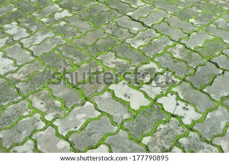 interlocking concrete pavement with moss growing along  - stock photo