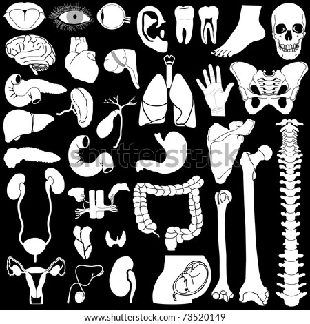 Internal organs in white and black colors, illustration - stock photo