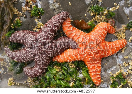 Interracial Starfish Couple - stock photo
