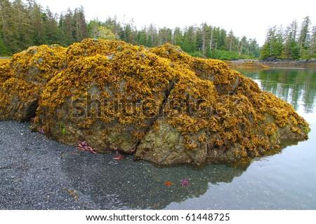 Intertidal zones exposed at low tide, near Sitka, Alaska - stock photo