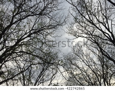 interwoven branches of trees against the sky with white clouds - stock photo