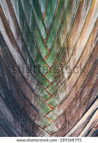 Interwoven pattern in nature - background texture of a palm or tropical plant with alternate leaves forming a pattern resembling a braid - stock photo