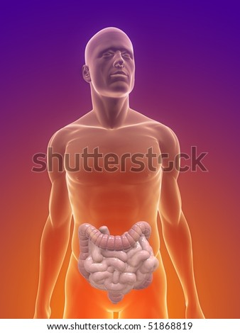 intestines - stock photo