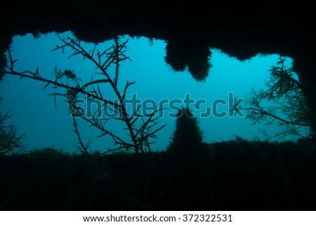 Into a shipwreck - stock photo