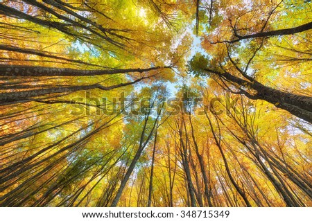 Into the autumn forest. Nature composition. - stock photo