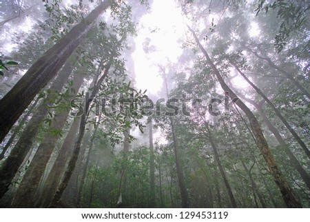 Into the deciduous forest - stock photo