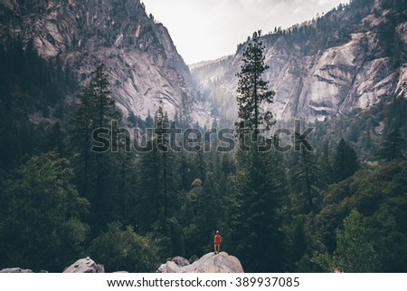 Into the forest - stock photo