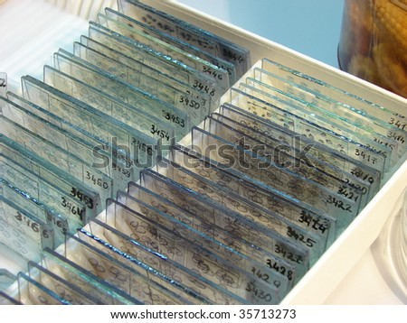 investigation of fixed preparations - stock photo