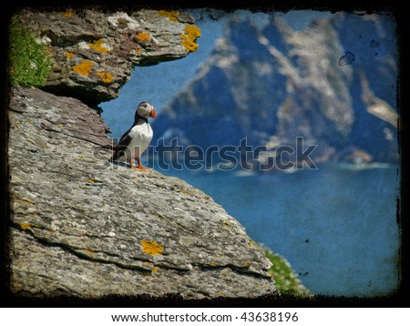 ireland grunge  puffin over looking ocean on cliff face