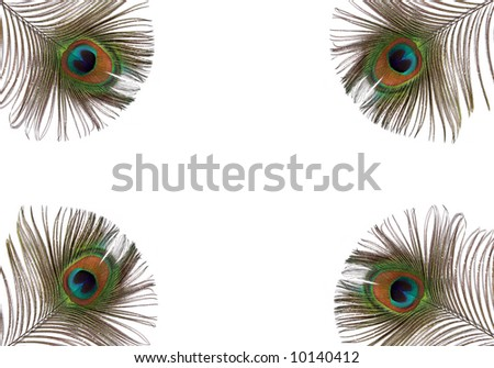 iridescent eyes of four peacock feathers set at each of the corners of the frame