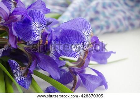 Iris flower. Bouquet of iris. Petals of a flower of an iris. Purple iris close-up. - stock photo