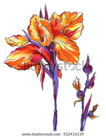 Iris flower for wedding printing products: cards, invitations, menu. Hand drawn watercolor flower on white background. Botanical illustration.  - stock photo