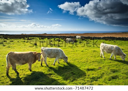 Irish fields - Northern Ireland - stock photo
