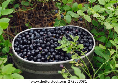 Iron container with blueberries